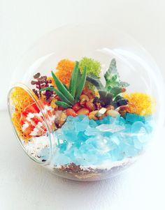 Plant Nite Losangeles PLANT NITE EVENT - Create a Succulent Terrarium with Sea Glass