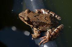 Frog and sun