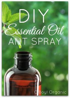 The best oils to use when trying to get rid of ants are Lemon – because it contains d-limonene which is toxic to ants. Peppermint because ants hate the smell and Tea Tree oil because it'a a natural astringent. Infuse cotton balls with one of the oils I mentioned and place in cabinets and other areas where needed. You can even make a little spray using all 3 oils.