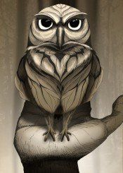 owl animal wild forest nature landscape free illustration brown