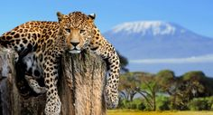 Things You Must See and Do in Tanzania