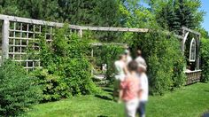This tall, open divider separated the sitting area from the lawn. The large, square lattice keeps material costs down. The greenery provides greater privacy.:: Privacy Screen Ideas and How to Make A Fence Taller