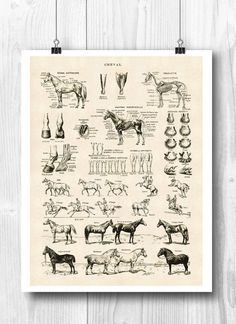 PRINTABLE Horse Art, Horse poster, Horse skeleton, Educational poster, Horse anatomy Print, Equestri