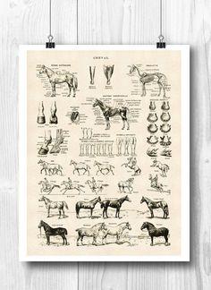 PRINTABLE Horse Art Horse poster Horse skeleton by DigitalArtLand