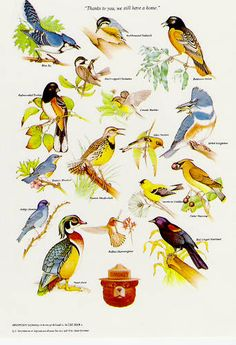 Smokey's Birds. Graphic of North American birds. Use with Apologia Zoology 1, Flying Creatures #homeschool http://shop.apologia.com/63-zoology-1