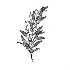branche olivier by leabrds tattoo i n k tatouage. Black Bedroom Furniture Sets. Home Design Ideas