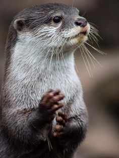 Otter                                                                                                                                                                                 More