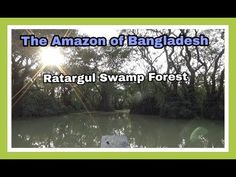 The Amazon of Bangladesh  | Ratargul Swamp Forest | 12D17 Day 17B