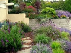 In this colorful garden, native plants mingle with Mediterranean species for a waterwise and low-care landscape. My favorite is the De La Mina Verbena nestled among the catmint and grasses. Landscape by Gardens by Gabriel in Morro Bay, CA. See more tips Landscaping Tips, Outdoor Landscaping, Outdoor Gardens, Colorado Landscaping, Tuscan Garden, Drought Tolerant Landscape, Pot Jardin, Xeriscaping, Tuscan Style
