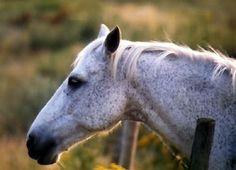 cute pets photo: Horse cute-horse.jpg