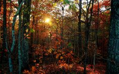 free download pictures of forest