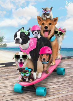 Unleashed and on a roll: your dog walking gig just got a lot easier. Cute Funny Animals, Cute Baby Animals, Funny Dogs, Animals And Pets, Cute Dogs, Cute Animal Pictures, Dog Pictures, Dog Walking, Dog Art