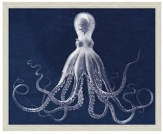 Blue Octopus. From Lord Bodner London Georgian Era 1826 original copperplate engraving.   H: 54 inches W: 42 inches  Framed H: 59 inches W: 47 inches  $750