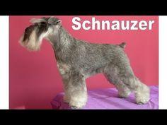 Grooming Guide - Miniature Schnauzer Pet Trim - Pro Groomer - YouTube
