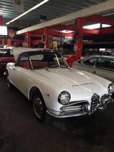 Lincoln Navigator, Alfa Romeo Giulia, Spider, Bmw, Spiders