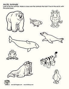 Arctic Animals Worksheet For 2nd 3rd Grade Arctic Tundra