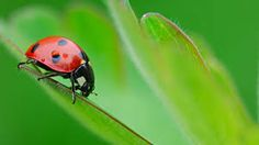 Image result for insects
