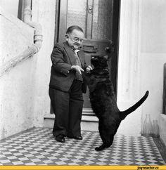 сквозь время,разное,генри беренс,самый маленький человек,котэ,прикольные картинки с кошками,живность