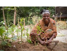 Grow an African Farm - Send a Cow Organizations, Cow, African, Projects, Log Projects, Blue Prints, Organizing Clutter, Cattle, Organizers