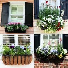 window boxes by The Basket Bike Girl