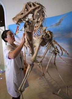 Angaturama limai, National Museum Rio | In China? Try www.importedFun.com for award winning kid's science |