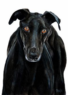 Greyhound Whippet Galgo Espanol Art Print Dog door TanjaOnTheWall
