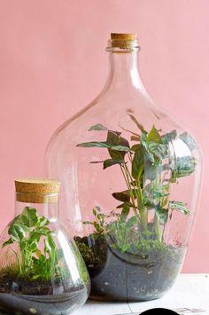 Image result for beste terrarium planten