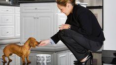 Does your dog refuse to eat when you're not around? Dog Training Methods, Basic Dog Training, Dog Training Techniques, Training Your Puppy, Training Dogs, Make Dog Food, Pet Food, Puppy Obedience Training, Positive Dog Training