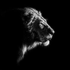 "111 Likes, 5 Comments - Gabi Guiard Photography (@gabi_guiard) on Instagram: ""Another portrait from my last trip with #bushlarksafaris The #okavangodelta is always amazing!…"""