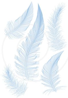 Illustration about Set of smooth blue feather,. Illustration of fluffy, bird, lightweight - 19881578 Feather Art, Feather Design, Feather Tattoos, Bird Feathers, Hand Tattoos, Tatoos, Feather Vector, Feather Tattoo Meaning, Feather Illustration