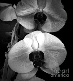 Title:  Orchids Monochrome   Artist:  Chalet Roome-Rigdon   Medium:  Photograph - Photography