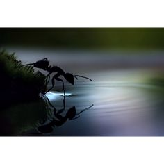 I usually kill ants...never thought about photographing them in macro like this!