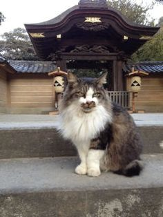 Japanese cat with a mustache!  I have a cat just like, except Angel's mustache is a little smaller. :)