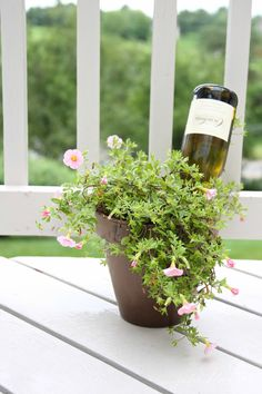 Water your plants while you're away with this brilliant idea!