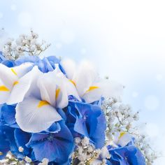 Floral Wallpaper Cool pic12fa Amazing