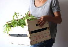 Potager de balcon: cultiver des salades en cagette ⋆ Kinoette Ainsi, Paper Shopping Bag, Salads