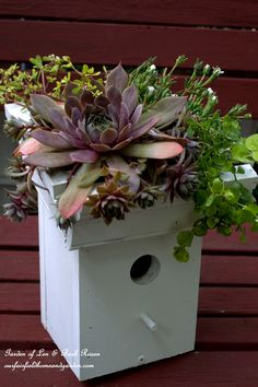 Easy-To-Make Succulent Greenroof Birdhouses! Don't have a lot of carpentry tools or skills? This is the project for you! No building! http://ourfairfieldhomeandgarden.com/diy-easy-greenroof-birdhouses/