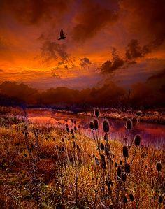 Intuition - Phil Koch, art photographer