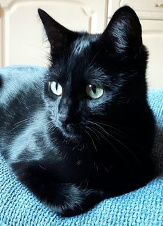 Pinning in memory of my sweet Sophia. She looked just like this kitty. It's been 15 years, but this face brought her straight back. Love you my little house panther. Cute Cats And Kittens, I Love Cats, Crazy Cats, Cool Cats, Kittens Cutest, Beautiful Cats, Animals Beautiful, Cute Animals, Gatos Cats