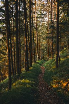 Late afternoon sun on a forest trail (Austria) by Roman Königshofer Forest Trail, Forest Path, Conifer Forest, Dark Forest, Beautiful World, Beautiful Places, Beautiful Forest, Landscape Photography, Nature Photography