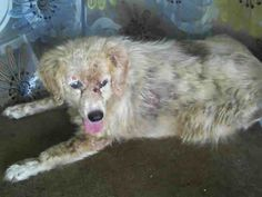 Orange County Animal Services Netpets Dogs