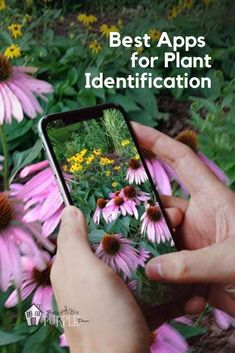 Two amazing apps for plant identification that actually work instead of plant id apps that don't work. Tested by an avid gardener! Unique Plants, Cool Plants, Flowers Perennials, Planting Flowers, Purple Flowering Plants, Flower App, Little Gardens, Small Gardens, Identify Plant