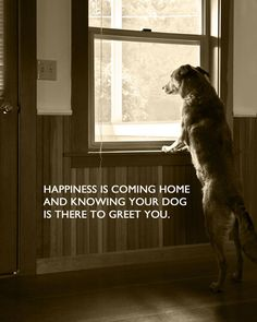 Happiness is coming home and knowing your dog is there to greet you!!