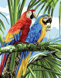 Two brightly coloured birds in their Amazonian home.