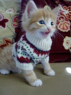 OK you got the picture of me wearing grandmas sweater, can I take it off now?