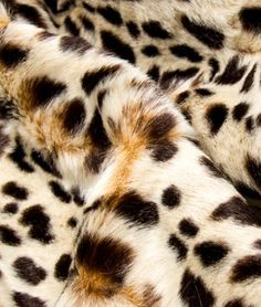 Robert Allen Queen Cheetah Chocolate Fabric - $88.35 | onlinefabricstore.net
