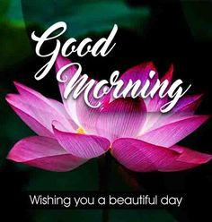 Love lotus good morning flower image Beautiful Good Morning Wishes, Cute Good Morning Images, Good Morning Images Flowers, Latest Good Morning, Good Morning Gif, Morning Pictures, Good Morning Quotes, Morning Msg, Inspirational Good Morning Messages