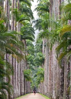 brazilwonders:  Jardim Botânico - Rio de Janeiro, RJ (by Maggie. W)
