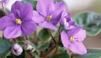 10 razones por las que necesitas más plantas en tu casa