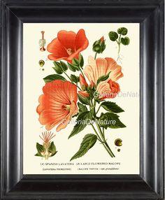 BOTANICAL PRINT Flower Art S30 4x6 5x7 8x10 by GalerieDeNature